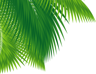 Palm Tree - Background Art